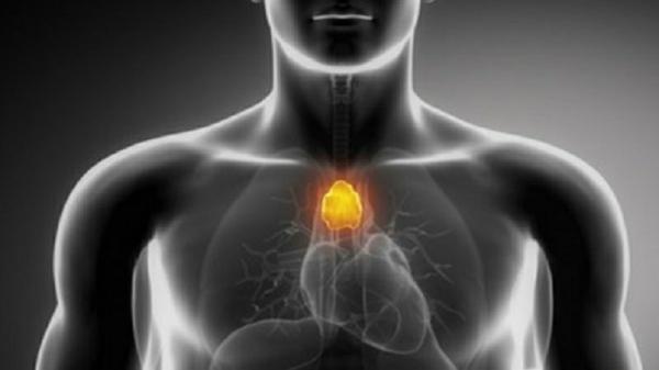 thymusdrüse funktion