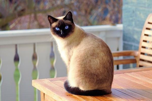 Basteln mit Katzenhaaren DIY Projekte mit Katzenhaaren Hauskatze