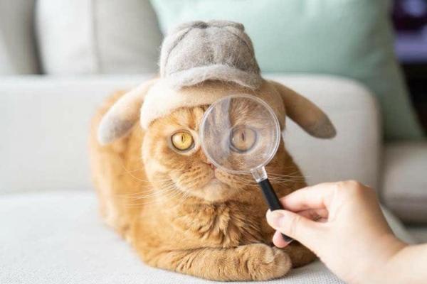 Basteln mit Katzenhaaren DIY Projekte mit Tierhaaren Hauskatze
