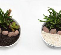 Hingucker auf der Fensterbank: Minigarten in der Tasse