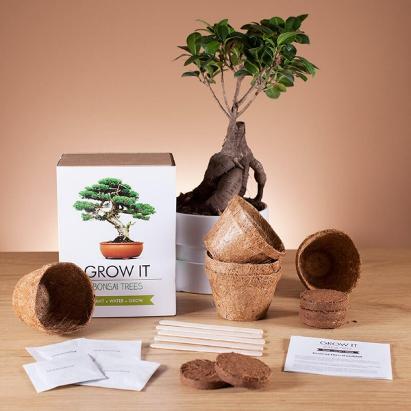 Liebliche und ausgefallene Geschenke für die beste Freundin bonsai kit zum selber wachsen