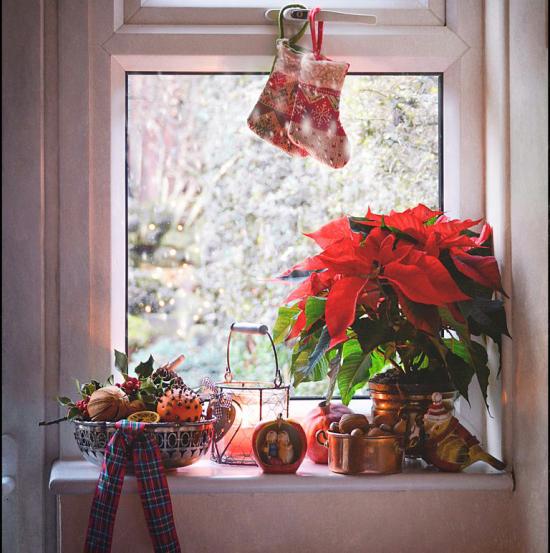 Weihnachtliche Fensterdeko Weihnachtsstern im Topf am Fenster sieht man auch von draußen herrliche Weihnachtsstimmung verbreiten