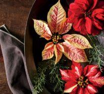 Weihnachtsstern Pflege – Tipps für eine gesunde Zierpflanze auch nach Weihnachten
