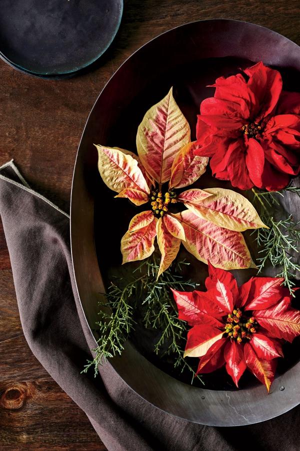 Weihnachtsstern Pflege - Tipps für eine gesunde Zierpflanze auch nach Weihnachten tischdeko schnittblumen sorten orange