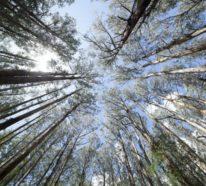 Eukalyptus Pflege Tipps für Hobbygärtner – puristische Zierpflanze im Überblick