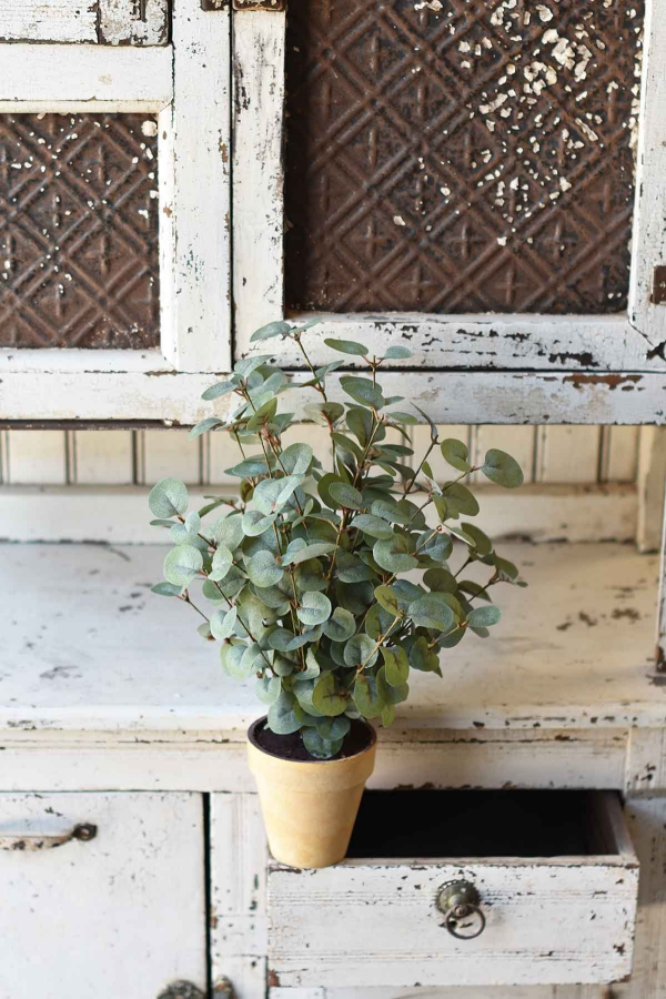 Eukalyptus Pflege Tipps für Hobbygärtner – puristische Zierpflanze im Überblick klein im topf keramik retro