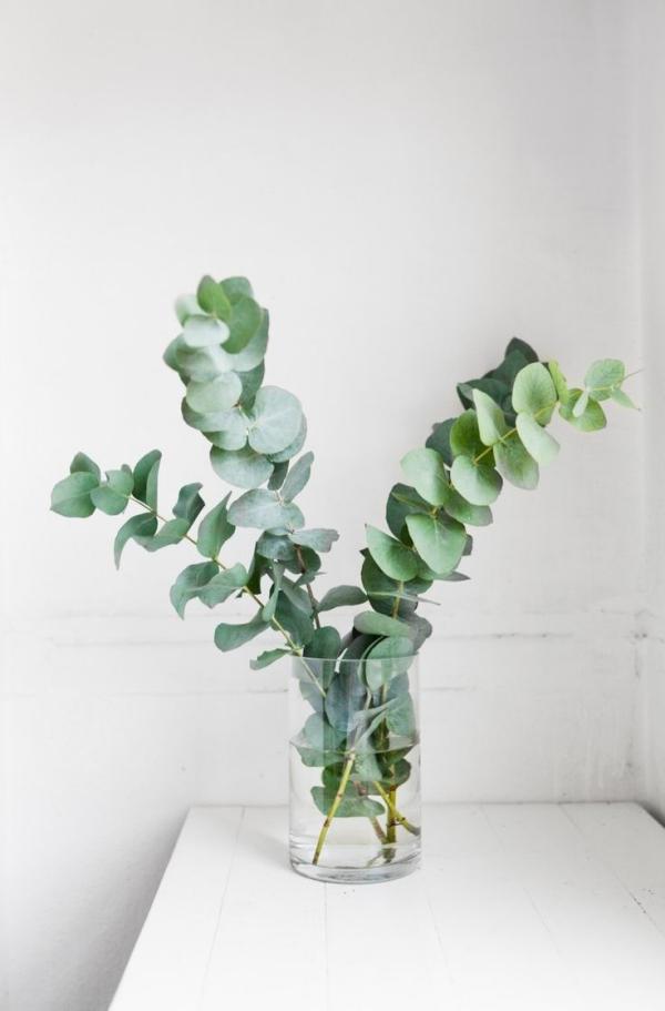 Eukalyptus Pflege Tipps für Hobbygärtner – puristische Zierpflanze im Überblick schnitt zweige deko vase