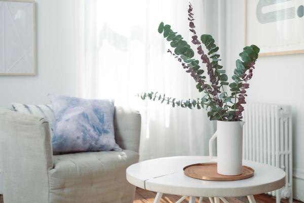 Eukalyptus Pflege Tipps für Hobbygärtner – puristische Zierpflanze im Überblick zierpflanze schnitt pflanze wohnzimmer