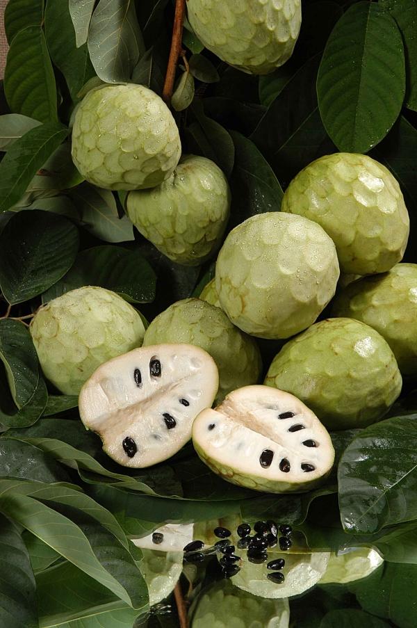 Gesündestes Obst Top 5 der nahrhaftesten Sorten zimtapfel gesund dracheneier