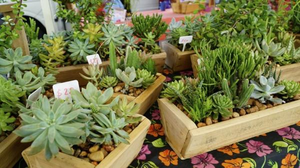 Nachhaltige Weihnachtsgeschenke 12 Ideen Weihnachtsfest Pflanzen