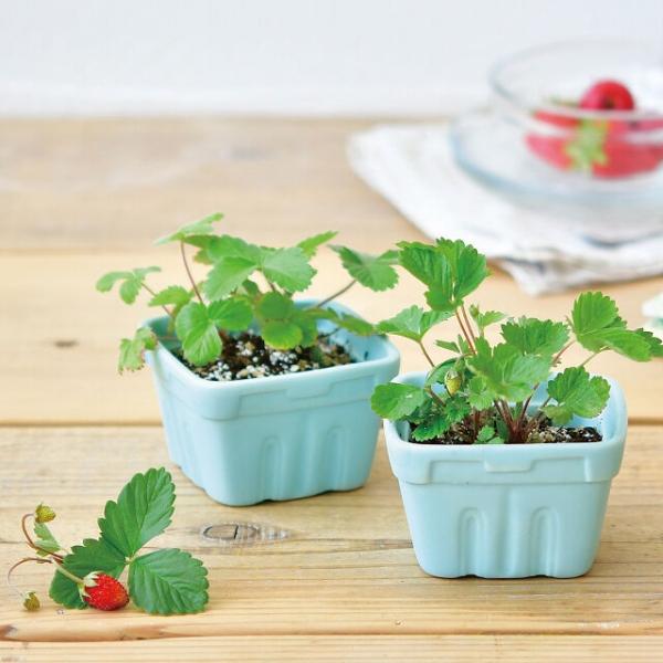 Witzige und praktische Online Schrottwichteln Ideen und Tipps erdbeeren kit selber anbauen