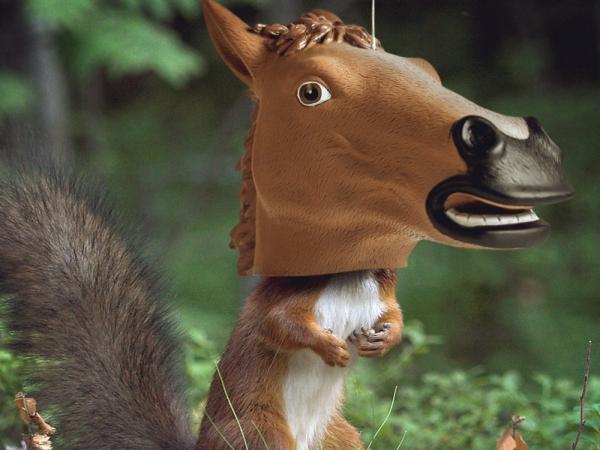 Witzige und praktische Online Schrottwichteln Ideen und Tipps lustige eichhörnchen futter station