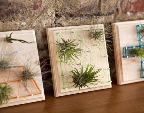fadenbilder mit luftpflanzen
