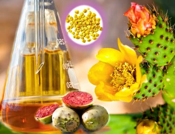 gesundes kaktusfeigenkernöl wirkung