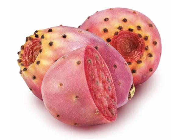 kaktusfeigenkernöl kaktus rote kaktusfeigen