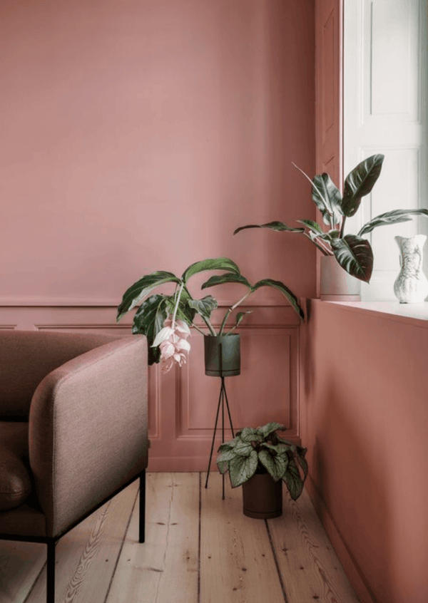terrakotta wandfarbe ledersofa zimmerpflanzen