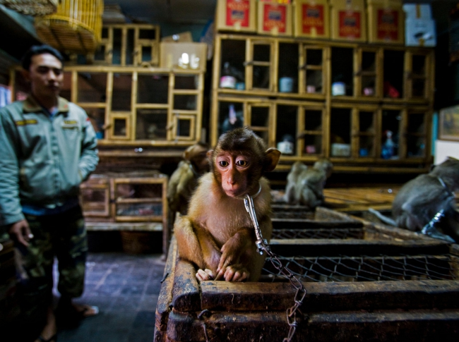 2020 Wildlife Photographer of The Year Sieger backroom business story award