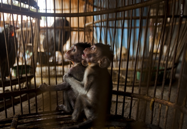 2020 Wildlife Photographer of The Year Sieger cage of misery photojournalism