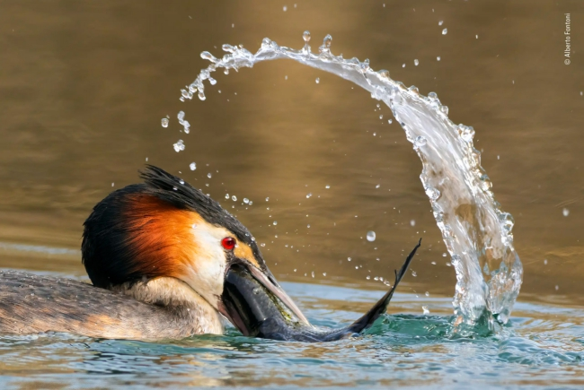 2020 Wildlife Photographer of The Year Sieger great catch rising star