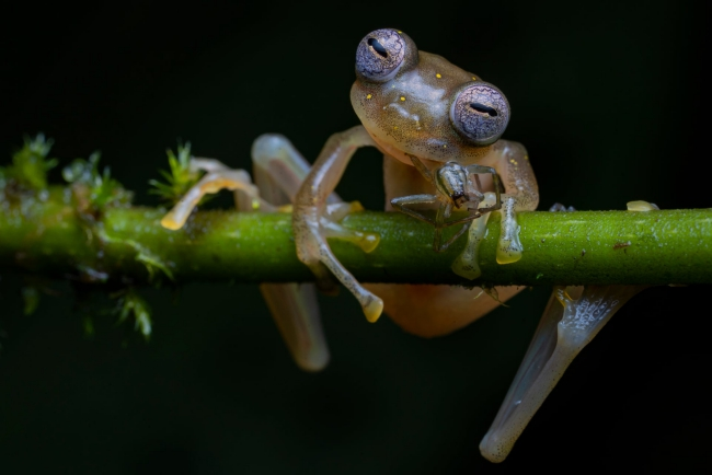2020 Wildlife Photographer of The Year Sieger life in the balance frosch
