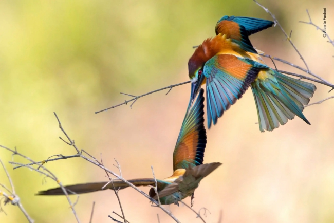 2020 Wildlife Photographer of The Year Sieger perch power rising star