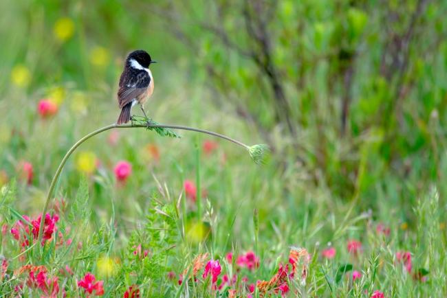 2020 Wildlife Photographer of The Year Sieger perfect balance junge fotografen