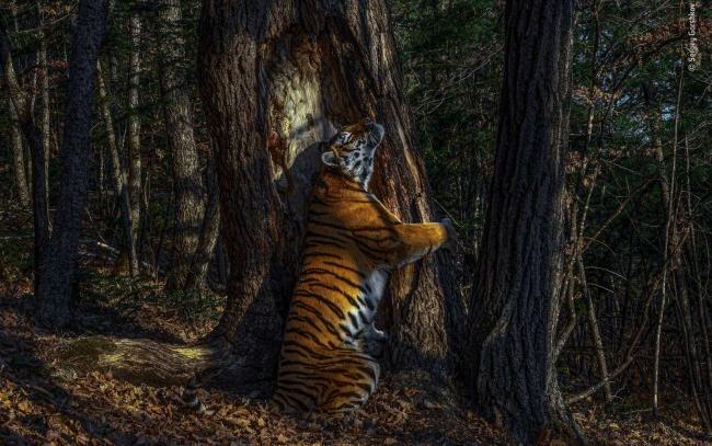 2020 Wildlife Photographer of The Year Sieger the embrace gewinner