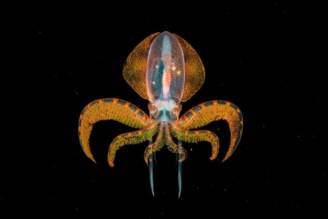 2020 Wildlife Photographer of The Year Sieger the golden moment unterwasser