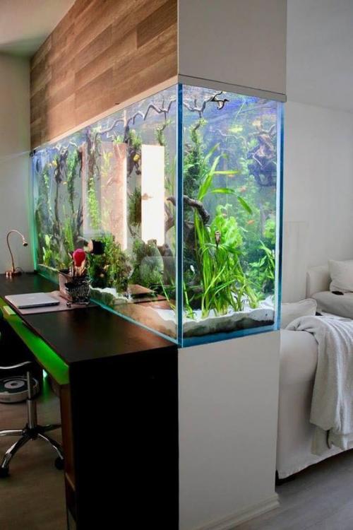 Aquarium zu Hause Raumteiler zwischen Heimbüro und Wohnzimmer ganz spektakuläre Gestaltung