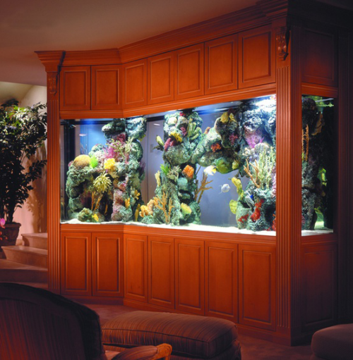 Ενυδρείο στο σπίτι μεγάλη ενσωματωμένη λεκάνη Διαφορετικά υποβρύχια φυτά μια ελκυστική στο δωμάτιο