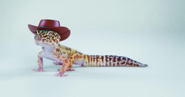 Artengerechte Leopardgecko Haltung – Tipps rund um die Terrarium Einrichtung und Pflege gecko mit cowboy hut