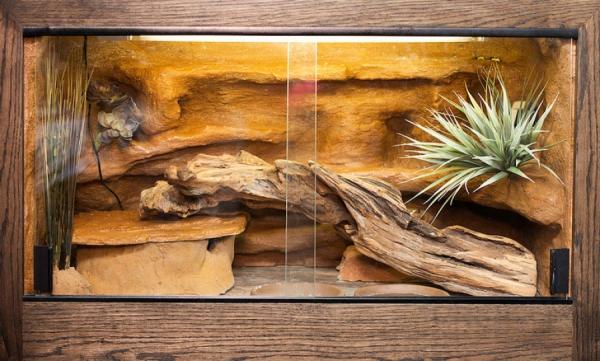 Artengerechte Leopardgecko Haltung – Tipps rund um die Terrarium Einrichtung und Pflege gecko terrarium einrichtung ideen