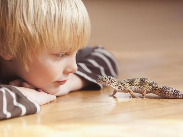 Artengerechte Leopardgecko Haltung – Tipps rund um die Terrarium Einrichtung und Pflege geckos und kinder freunde