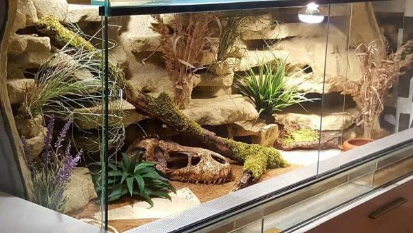 Artengerechte Leopardgecko Haltung – Tipps rund um die Terrarium Einrichtung und Pflege terrarium setup beispiel
