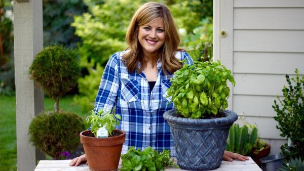 Basilikum Pflege im Topf und im Garten – aromatische Kräuter das ganze Jahr über kräuter pflegen büschchen schön garten