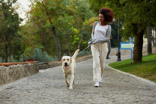 Crash Diät – Hier ist alles, was Sie darüber wissen sollten mit dem hund spazieren übung training