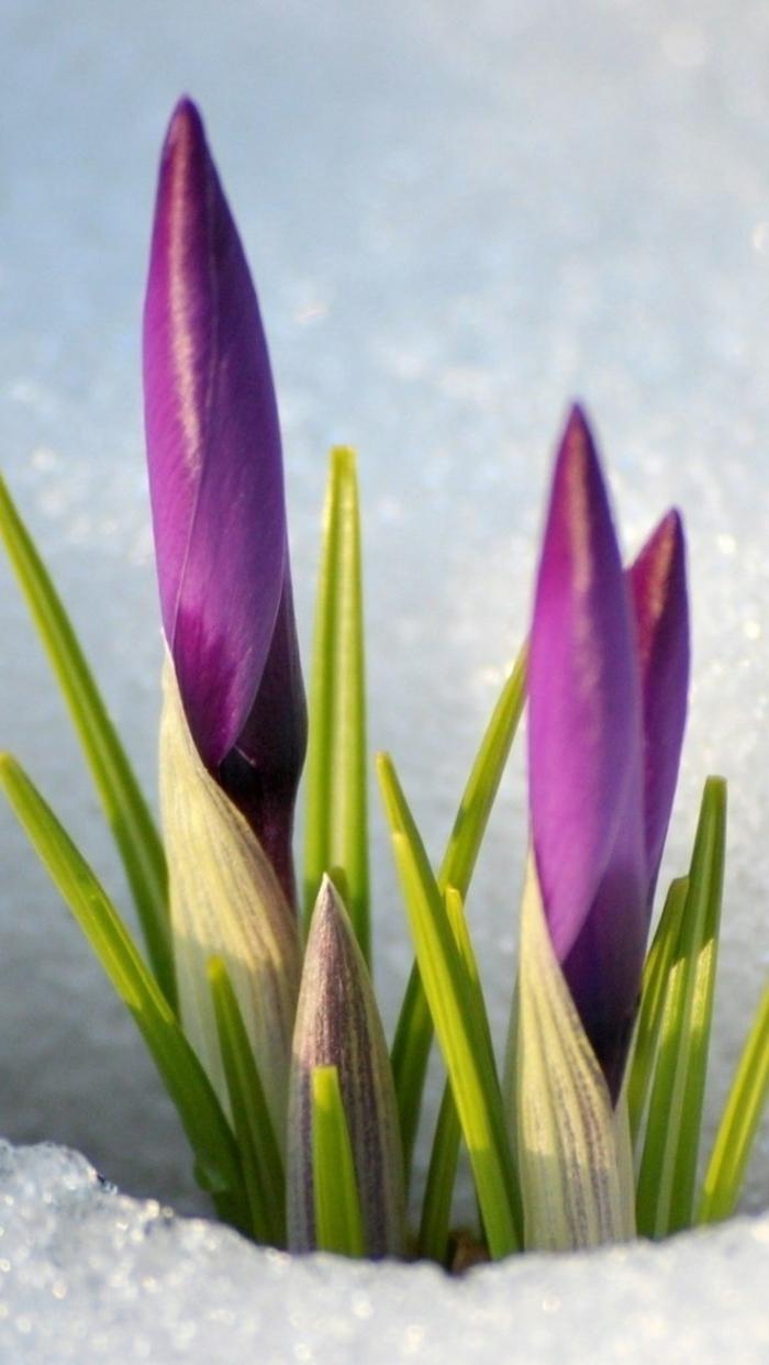Frühlingsdeko basteln mit Naturmaterialien crokuss