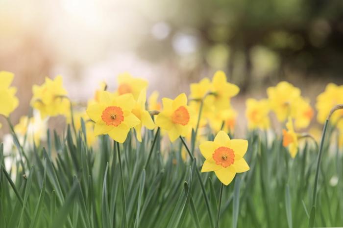 Frühlingsdeko basteln mit Naturmaterialien narzisse
