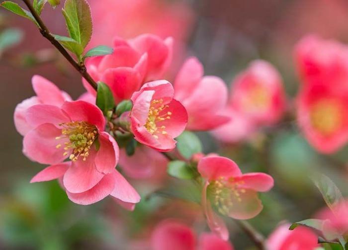Frühlingsdeko basteln mit Naturmaterialien quittenbaum