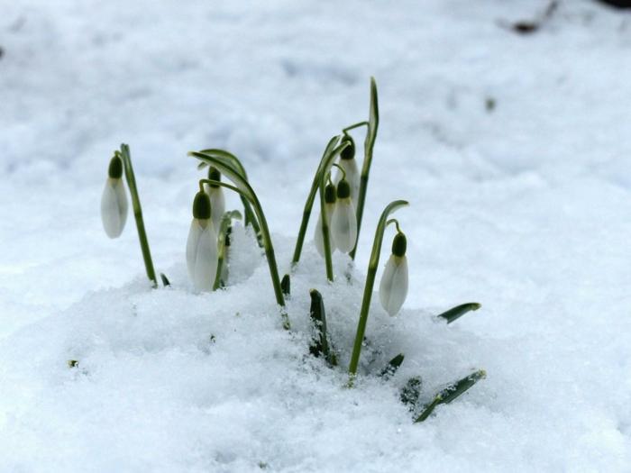 Frühlingsdeko basteln mit Naturmaterialien scheeglockchen
