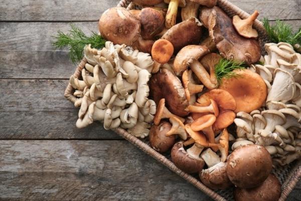 Gesundes Essen in Corona Zeiten Pilze essbare Sorten sammeln kochen schmecken gut