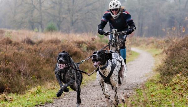 Natürliche Beruhigungsmittel aus der Naturapotheke und weitere Anti-Stress Tipps radfahren mit hunden sport