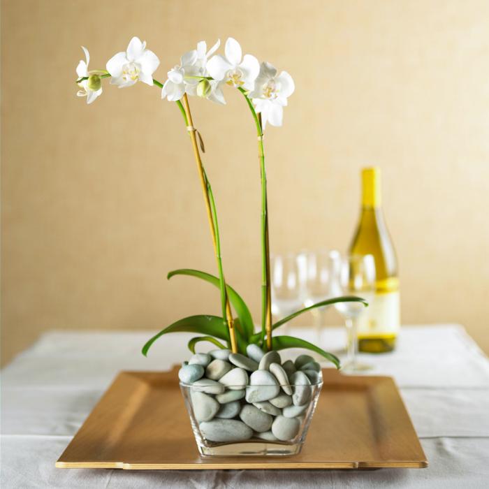 Orchideen richtig pflegen Glasgefäß mit kleinen Steinen gefüllt schöne elegante pflanze mit weißen Blüten