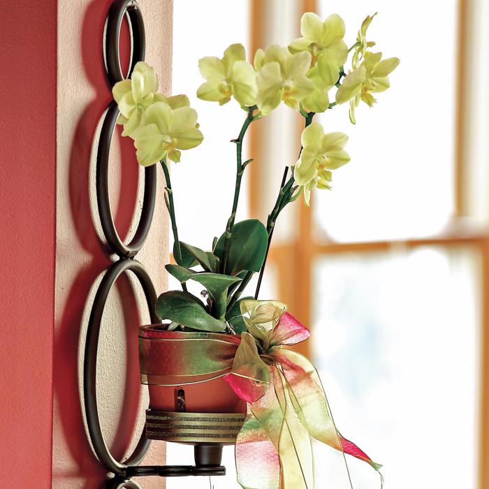 Orchideen richtig pflegen Orchidee als Wanddeko nicht weit vom Fenster am sonnigen Standort empfindlich gegen Kalk