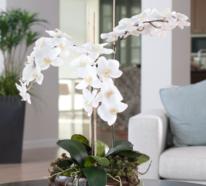 Orchideen richtig pflegen  – die wichtigsten Pflegetipps für die exotischen Schönheiten