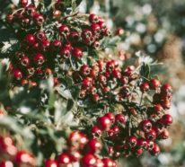 12 farbenfrohe und robuste Winterpflanzen für einen lebendigen Garten