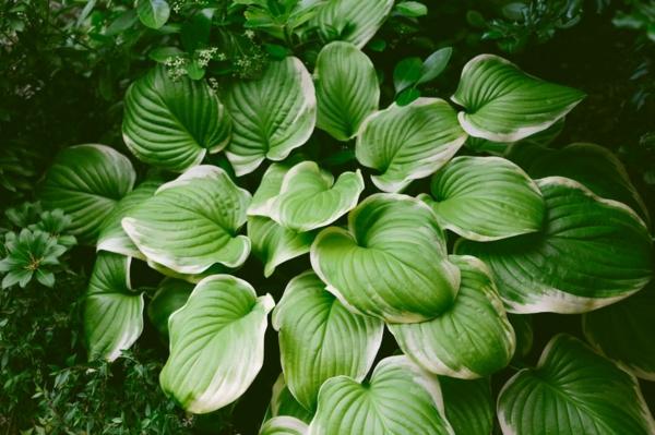 farbenfrohe und robuste Winterpflanzen Taglilie