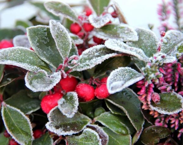 farbenfrohe und robuste Winterpflanzen
