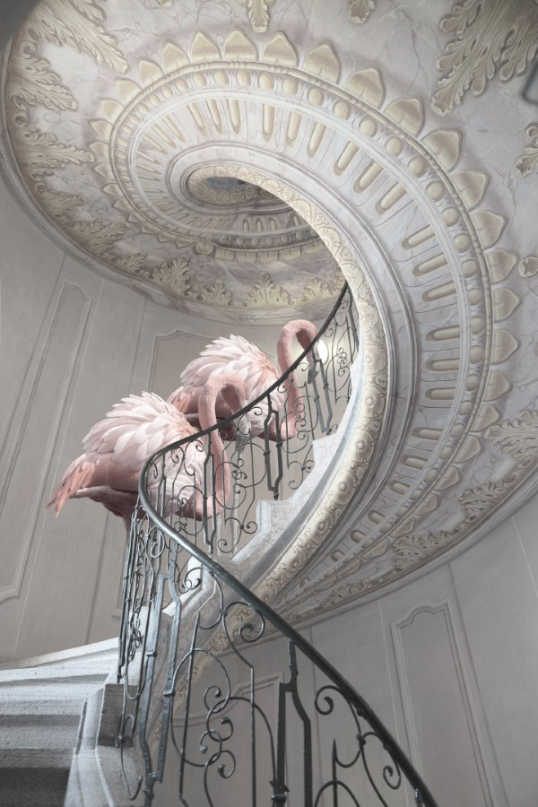 2020 Tokyo International Foto Awards – Top 20 Gewinnerfotos des Jahres treasures flamingo treppen