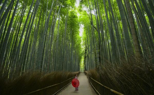 Februar ist der nationale Monat des Haiku Gedicht Schreibens bambus wald japan